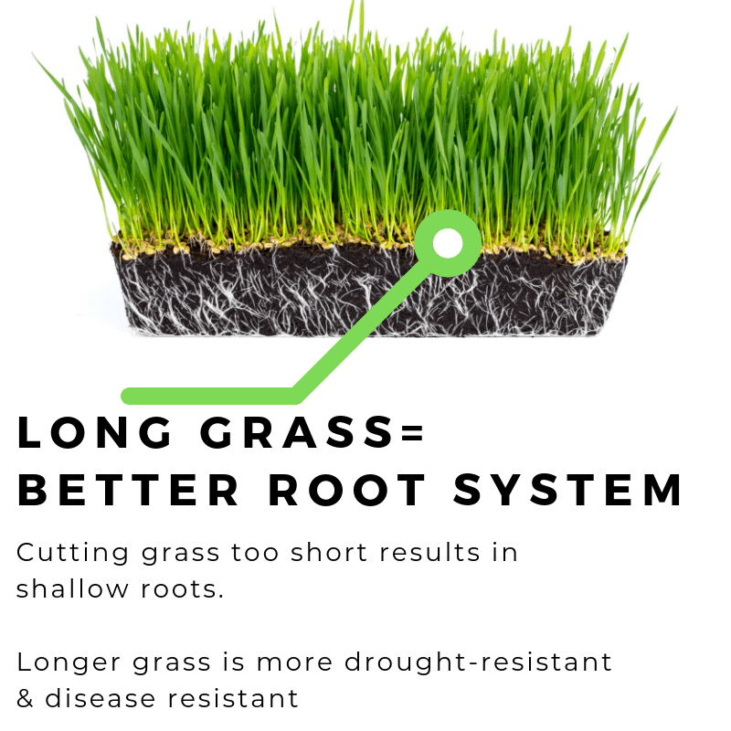 longer grass results in a better root system info