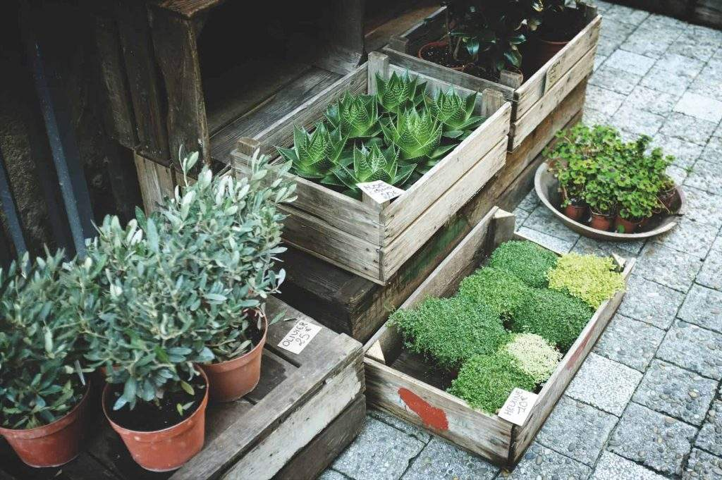 5 Reasons to Purchase Your Plants from a Local Nursery