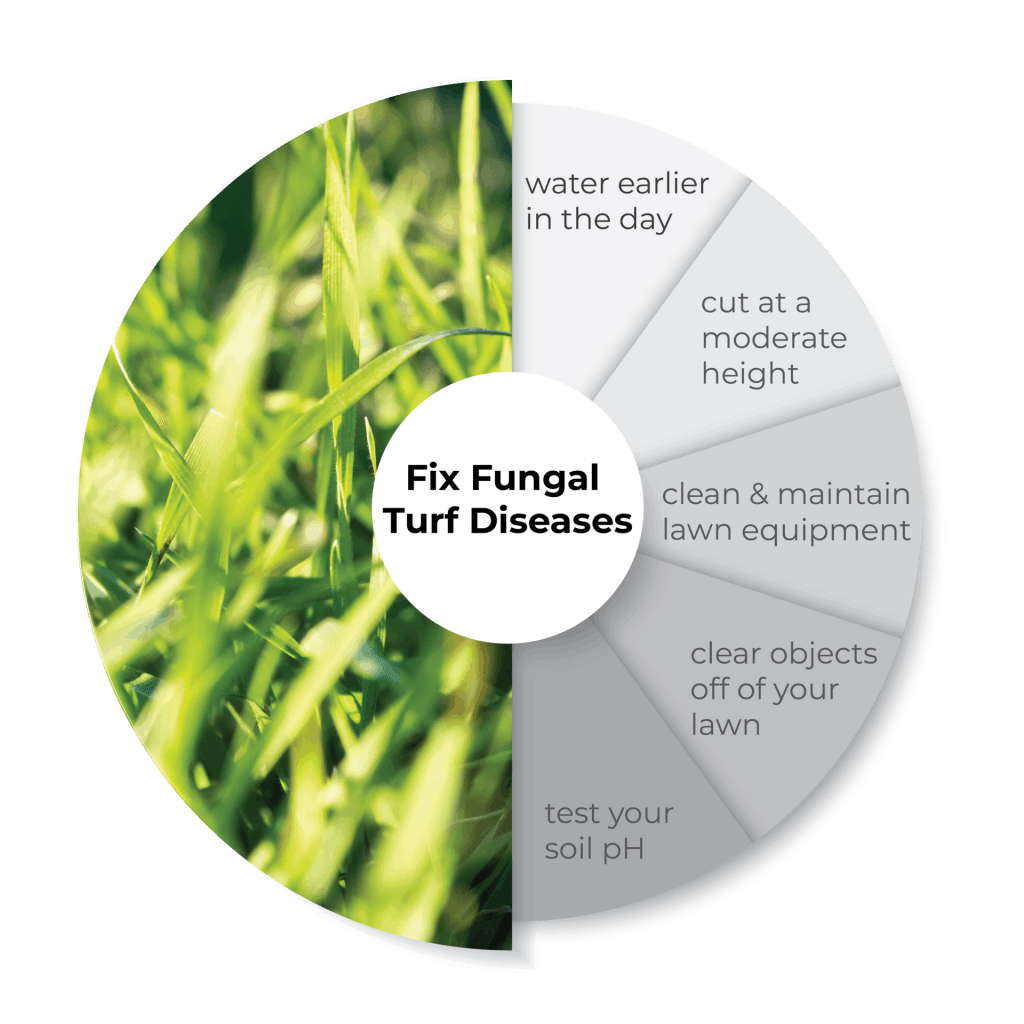 What's wrong with my lawn? Preventing and treating fungal diseases on lawn infographic