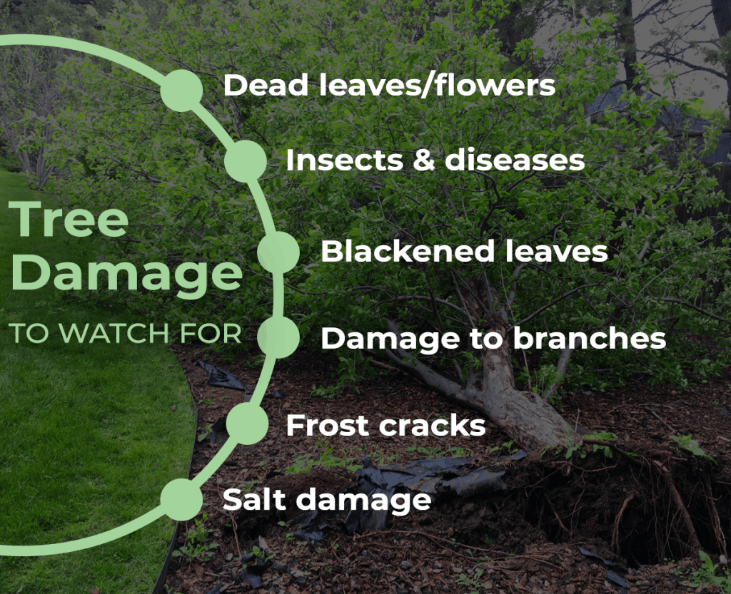 Storm Damage to Trees Common Problems and Solutions