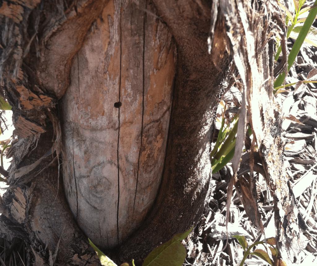 tree frost crack