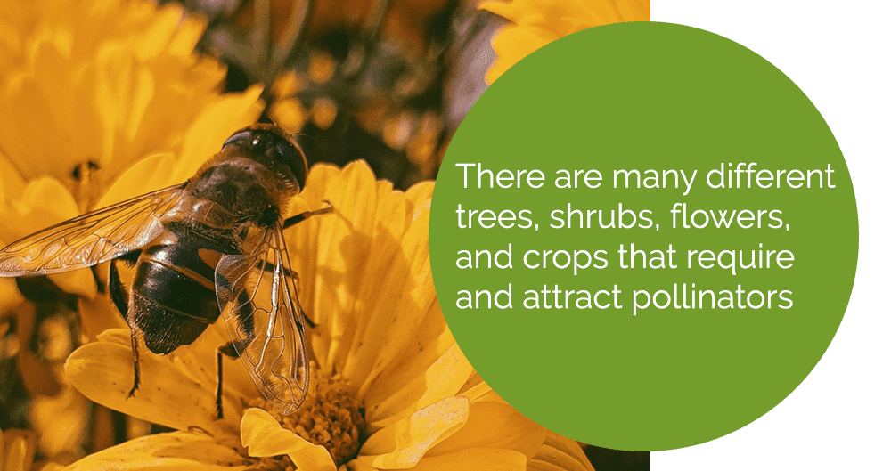 types of plant life that attract pollinators