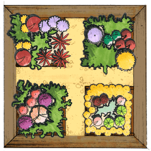vegetable garden layout 1