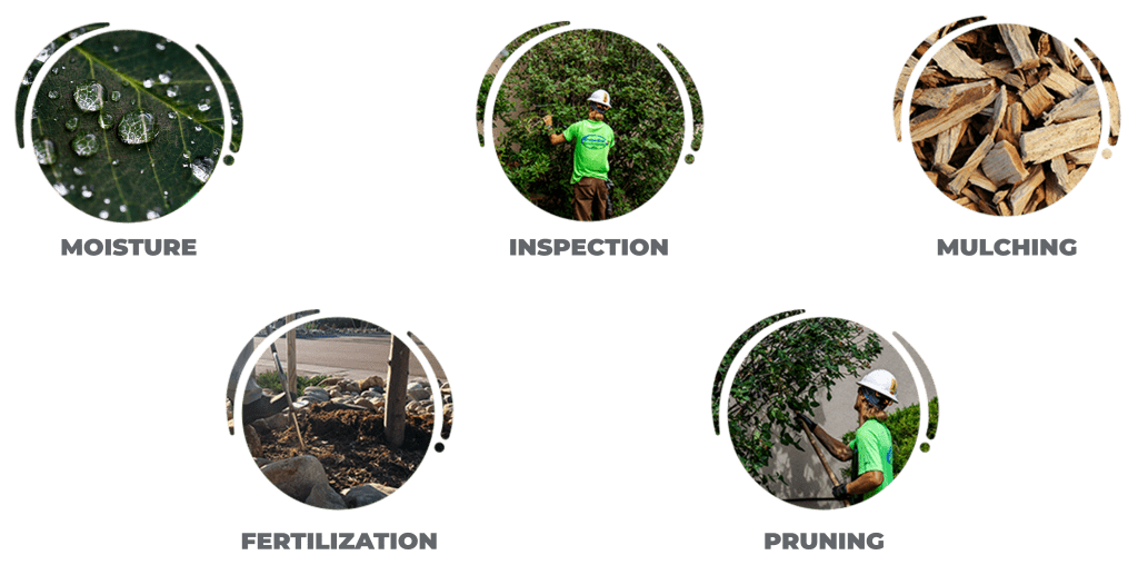 moisture, inspection, mulching, fertilization and pruning