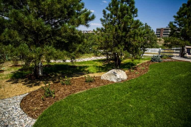Backyard Turf Area