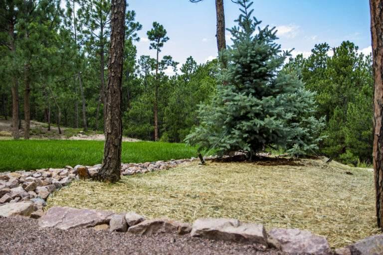 Native Grass & Trees